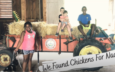 We Found Chickens for Naarah